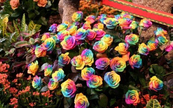 а. радужные розы