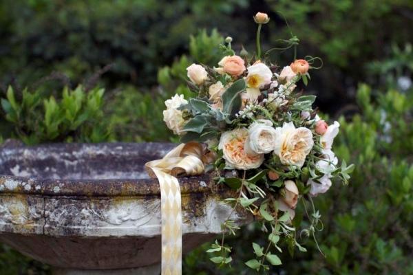 а. роза Sweet Juliet фото