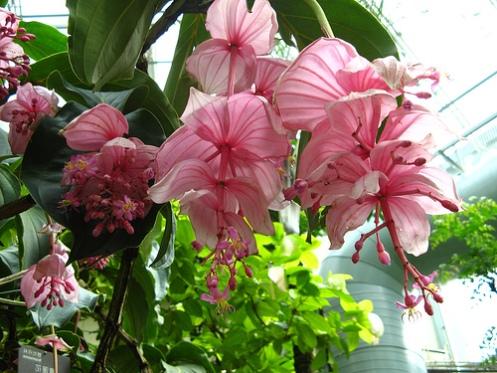 а. самые дорогие цветы в мире 3