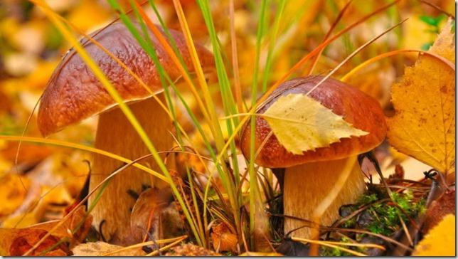 1. 1. картинки гибы фото грибы осенью все о грибах