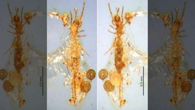 V-yantare-obnaruzhili-skorpiona-zhivshego-100-millionov-let-nazad
