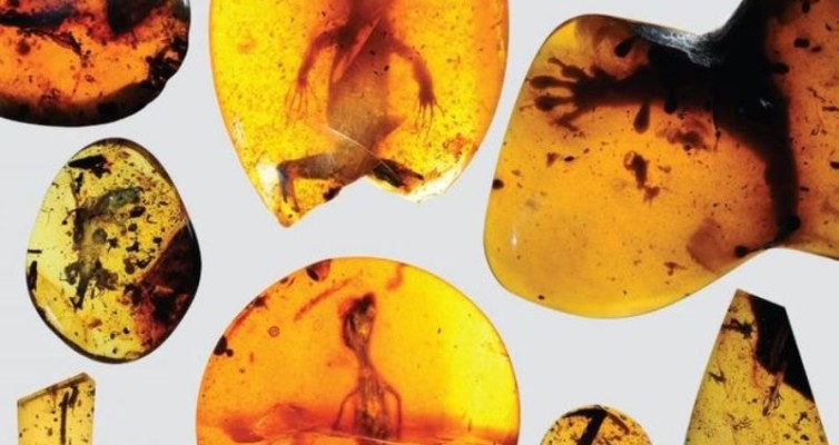 v.-issledovateli-soobshhali-v-Science-Advances-o-nahodke-starejshego-v-mire-hameleona-i-11-yashherits-v-yantare