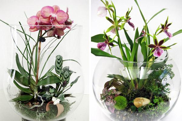 ideya-podarka-na-den-rozhdeniya-florarium-florarium-svoimi-rukami