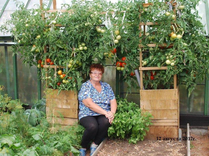 kak-vyrastit-pomidory-v-bochkah....