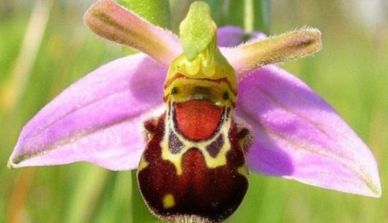 Orhidei-pohozhie-na-babochek-ptits-i-zhivotnyh-11
