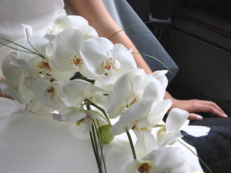Orhidei-pohozhie-na-babochek-ptits-i-zhivotnyh...