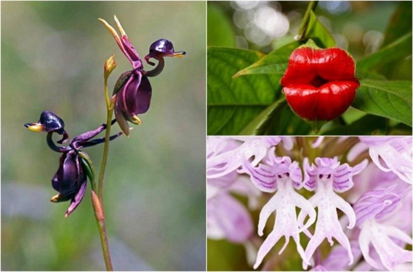 orhidei-pohozhie-na-ptits-lyudej-i-zhivotnyh