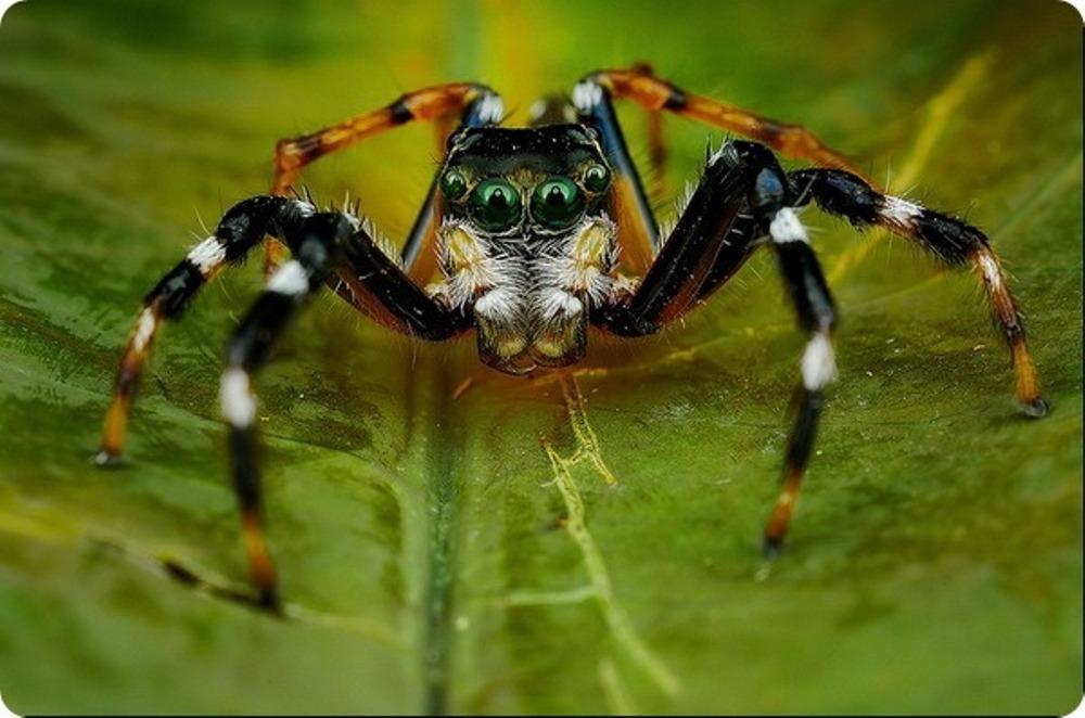 samye-krasivye-foto-paukov