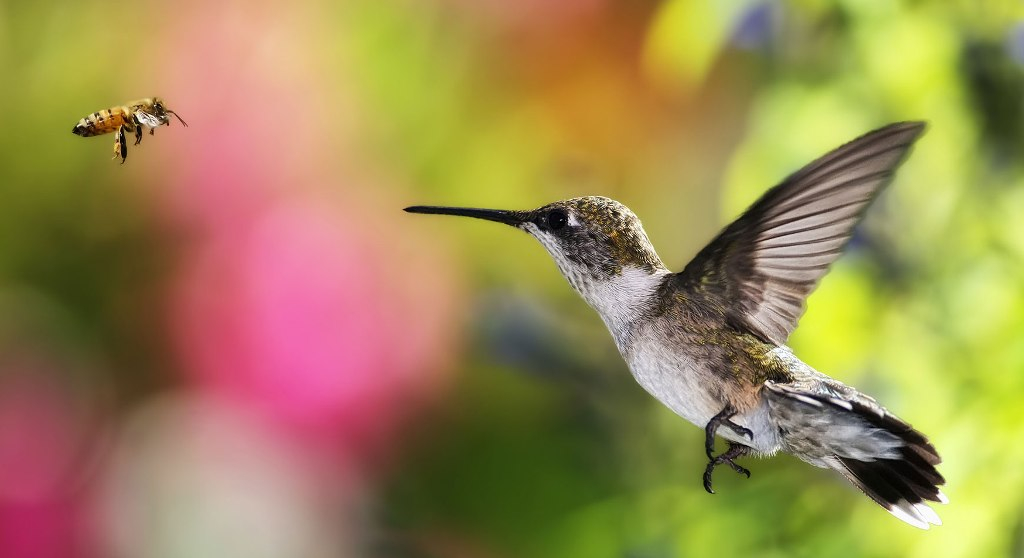 Samaya-malenkaya-ptitsa-Kolibri-2-video-foto-1