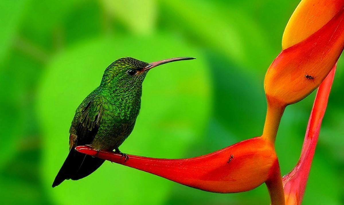 Samaya-malenkaya-ptitsa-Kolibri-2-video-foto-2