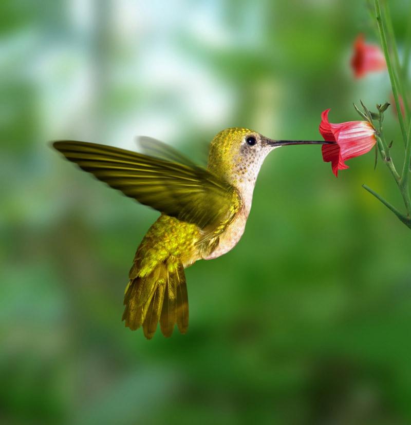Samaya-malenkaya-ptitsa-Kolibri-2-video-foto-5