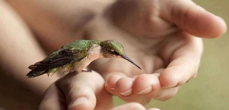 kolibri-na-rukah-cheloveka-pet-vodu-s-ladonej