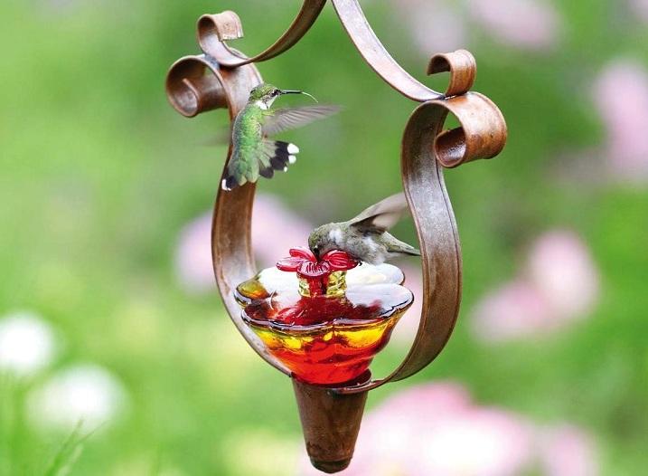 kolibri-opisanie-kormushka-kolibri