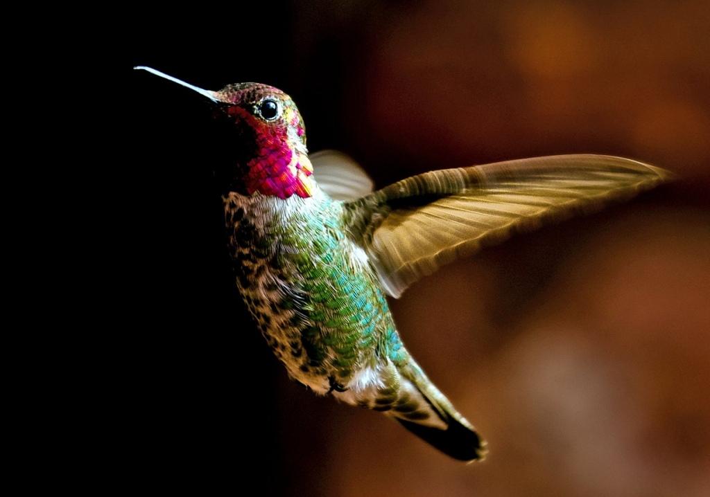 Самая первая птица фото