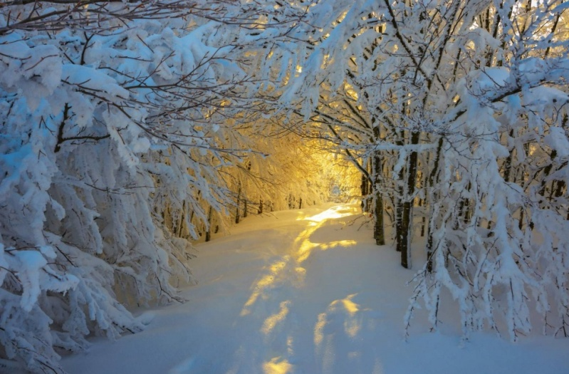 Zima.-Natsionalnyj-park-Kampina-Italiya