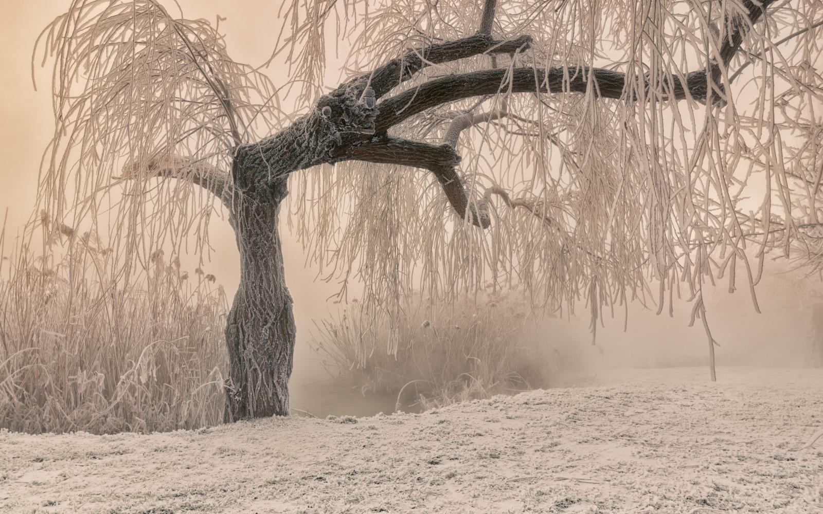 Zima.-Rossiya.-Zimnee-utro-v-Krasnodare.-avtor-foto-Aleksandr-Plehanov