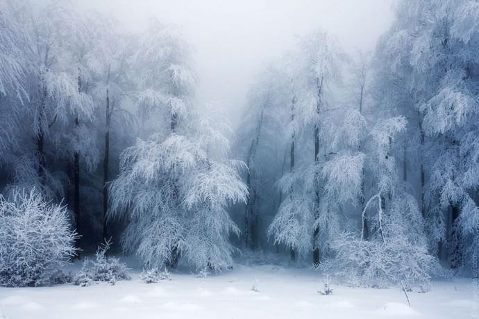 Zima.-Zamerzshij-les.-Fotograf-Evgenij-Dinev