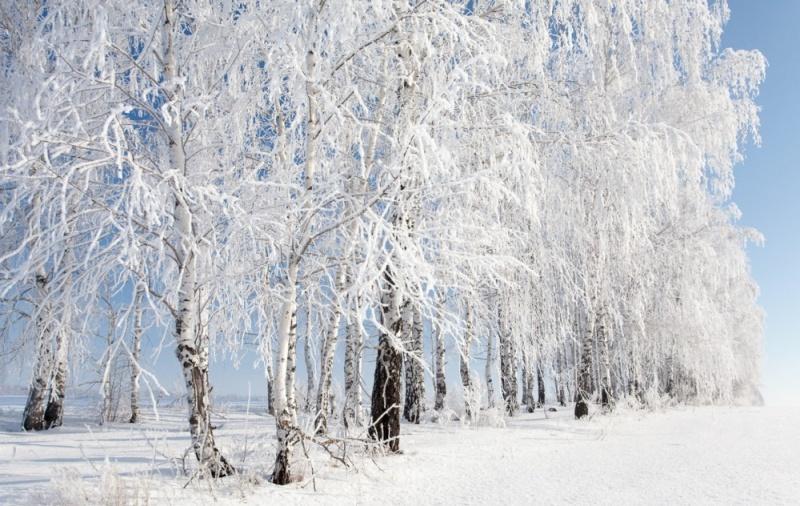 zima-v-rossii-snezhnye-berezy-avtor-denis-belyaev
