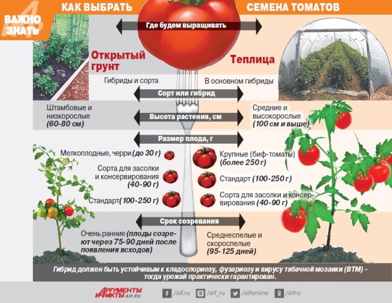 Kak-vybrat-semena-tomatov