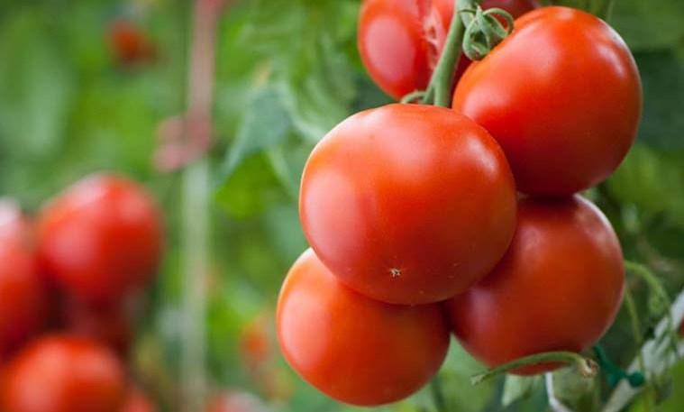Kakie-sorta-tomatov-luchshe-vsego-vyrashhivat-na-rasadu-v-marte...