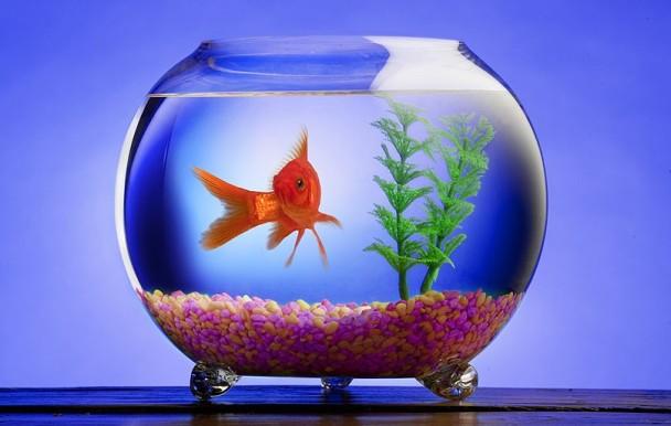 kak-izmenit-interer-v-syomnoj-kvartire-akvarium-s-rybkami