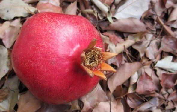 plody-granata-rekomendatsii-po-vyboru-na-rynke-pri-pokupke