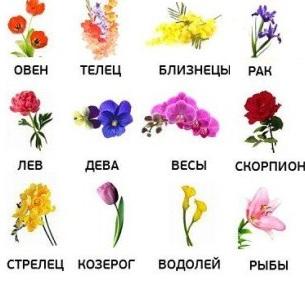 tsvetochnyj-goroskop-dlya-vseh-znakov-zodiaka
