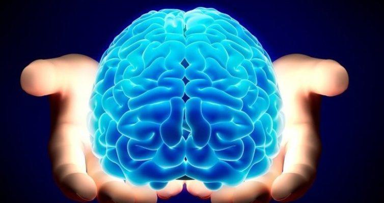 mozg-cheloveka-stroenie-i-funktsii-vse-o-mozge-foto-i-video...