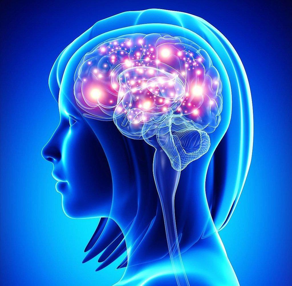 mozg-cheloveka-stroenie-i-funktsii-vse-o-mozge-foto-i-video