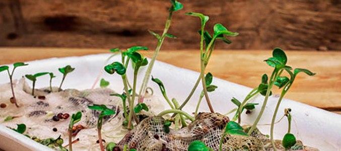 prorashhivanie-semyan-kak-pravilno-prorashhivat-semena-pered-posadkoj-foto...