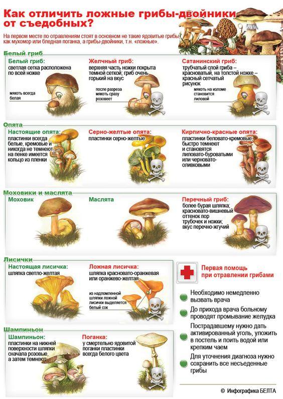 infografika-kak-otlichit-sedobnye-griby-ot-lozhnyh-tablitsa