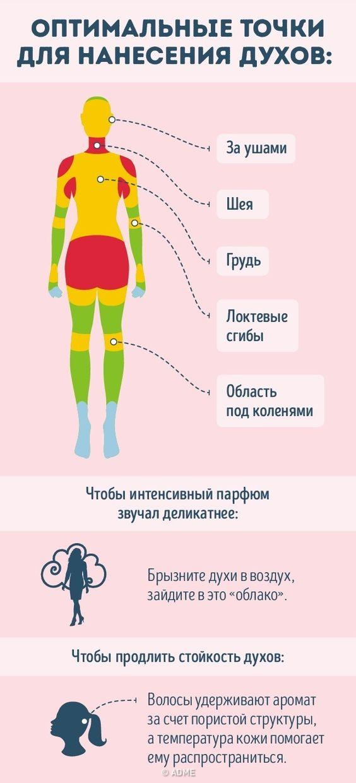 infografika-optimalnye-tochki-dlya-naneseniya-duhov-tablitsa