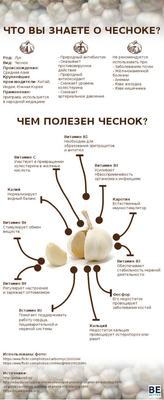 infografika-vse-o-chesnoke-chem-polezen-chesnok-svojstva-i-funktsii