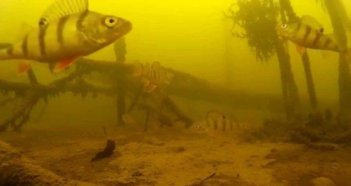 letnyaya-rybalka-sovety-rybalovu-lovlya-okunya-letom-podbor-snasti