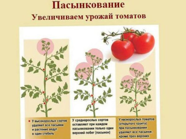 chem-podkarmlivat-pomidory-chtoby-byl-obilnyj-horoshij-urozhaj-retsept-podkormki-pasynkovanie-tablitsa