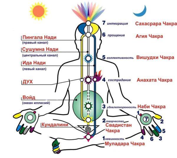 mozhno-li-pohudet-s-pomoshhyu-jogi-joga-dlya-nachinayushhih-video-uroki-po-joge-shema-chakr-cheloveka