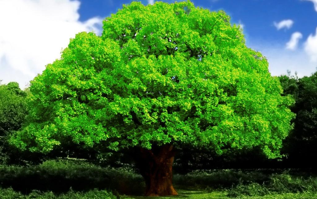Названия деревьев и их продолжительность жизни