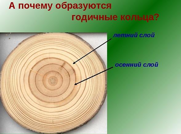 Возраст деревьев таблица