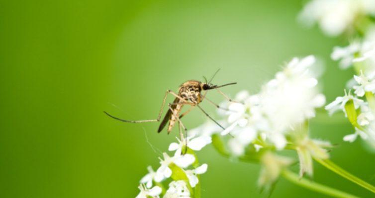 vosem-samyh-luchshih-zapahov-i-aromatov-ot-komarov-i-muh-drugih-nasekomyh...