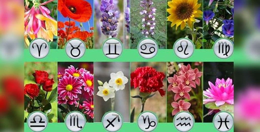 Test-kakie-vashi-tsvety-po-znaku-zodiaka-uznajte-svoj-luchshij-tsvetok-po-svoemu-astrologicheskomu-sozvezdiyu