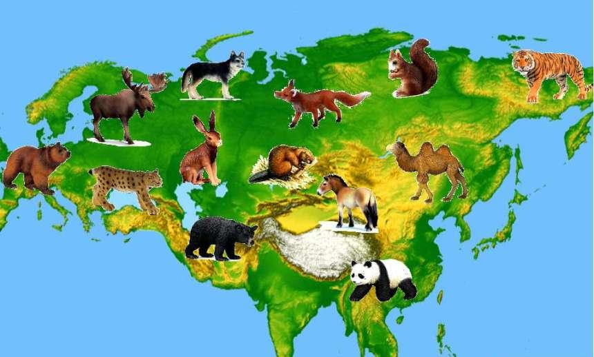 Животный мир картинки евразии