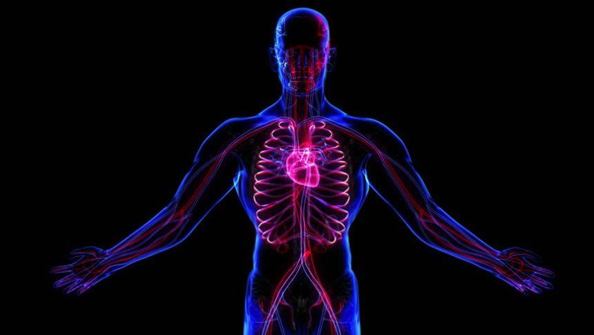 Test-po-Anatomii-naskolko-horosho-vy-znaete-organizm-cheloveka-proverte-svoi-znaniya-voprosy-anatomiya
