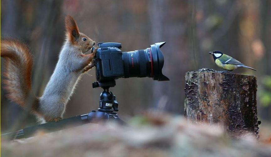 foto-zametki-interesnye-i-zabavnye-kartinki-krasivye-foto-prirody-avtor-etogo-foto-Vadim-Trunov