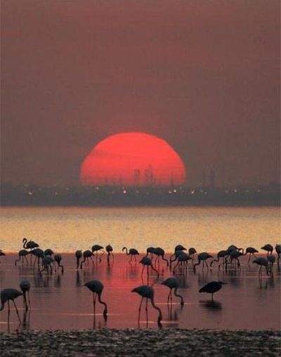 foto-zametki-samye-krasivye-pejzazhi-prirody-Flamingo