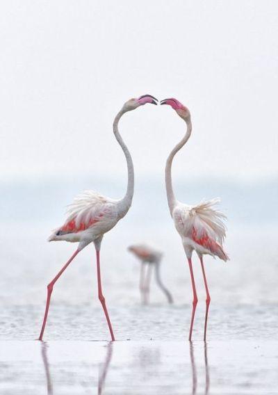 foto-zametki-samye-krasivye-pejzazhi-prirody-para-flamingo...