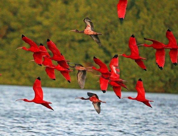 foto-zametki-samye-krasivye-pejzazhi-prirody-ptitsy-rozovyj-flamingo