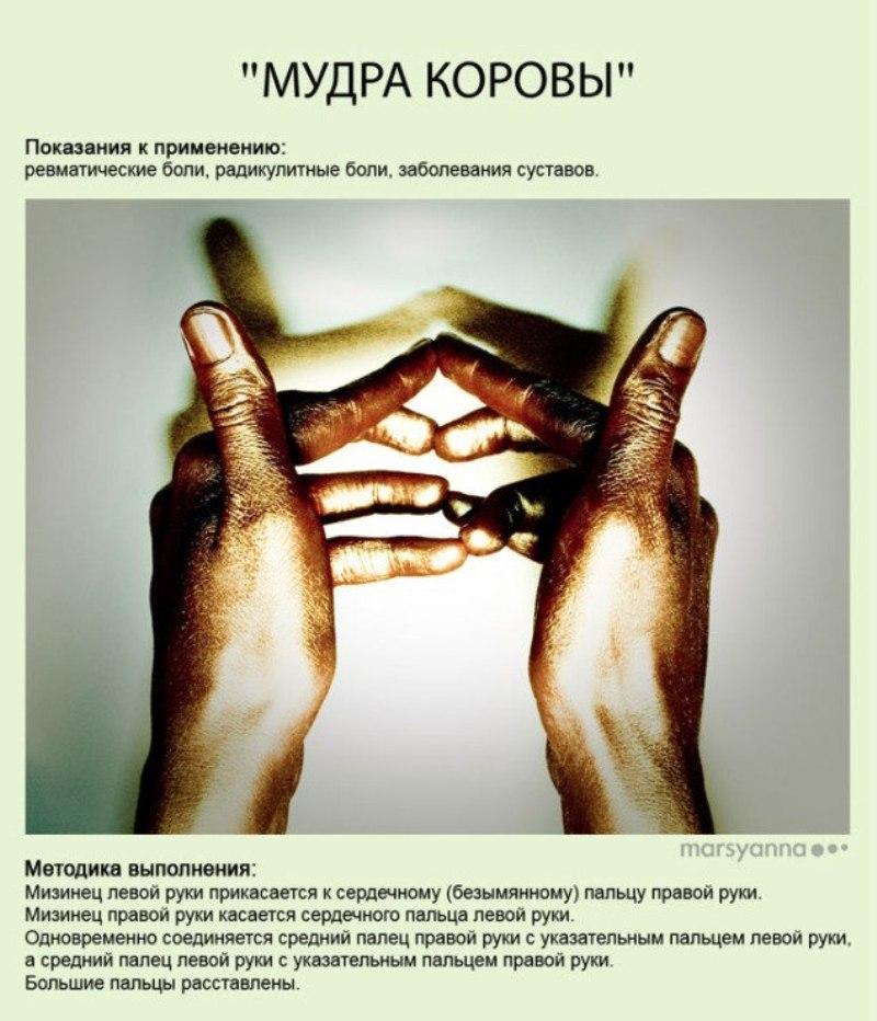 zametki-Jogi-Mudry-Mudra-Korovy-foto-15