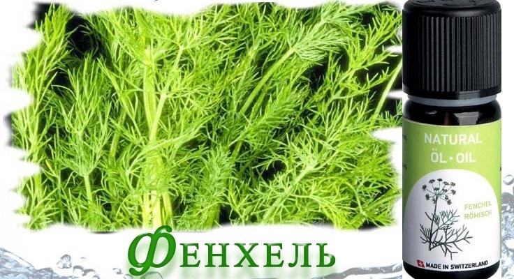 aromaterapiya-dlya-pohudeniya-nyuhaem-i-stanovimsya-strojnee-perechislenie-aromatov-dlya-pohudeniya-fenhel...