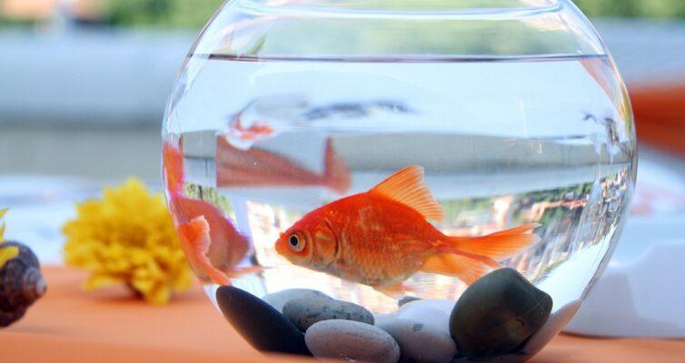 narodnye-primety-ob-akvariume-i-rybkah-foto-akvarium-i-zolotaya-rybka