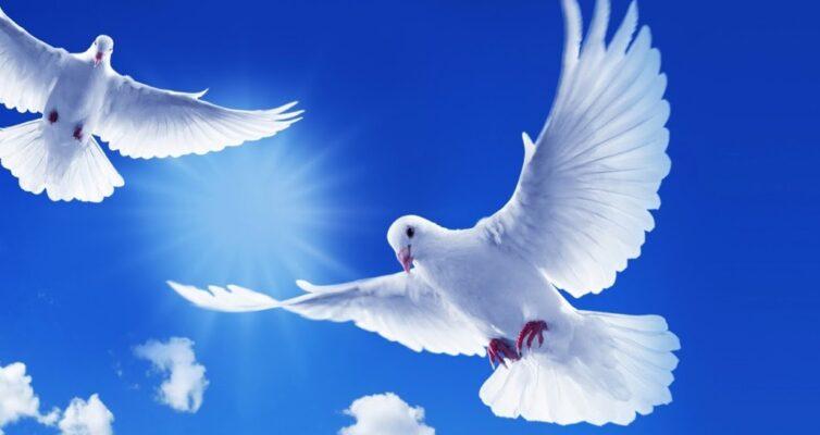 primety-i-poverya-o-golubyah-foto-belye-golubi-letyat-v-sinem-nebe